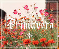 Primavera hand lettering. With flowers garden on background. Parallel pen calligraphy Stock Image