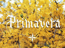 Primavera hand lettering. With yellow flowers on background. Parallel pen calligraphy Stock Photo
