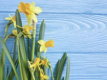 Primavera hermosa de la invitación de los narcisos elegante en un fondo de madera azul de la boda romántico Fotos de archivo