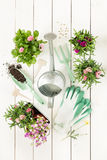 Primavera - herramientas que cultivan un huerto y flores en potes en la madera blanca Imágenes de archivo libres de regalías