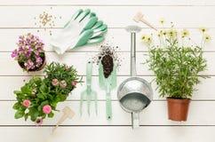 Primavera - herramientas que cultivan un huerto y flores en potes en la madera blanca Foto de archivo