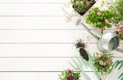 Primavera - herramientas que cultivan un huerto y flores en potes en la madera blanca Imagen de archivo