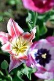 Primavera 2018 II dei fiori di colori Immagini Stock