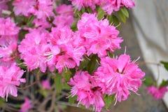 Primavera a Kyoto, Giappone Immagini Stock Libere da Diritti