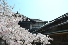 Primavera a Kyoto, Giappone Fotografia Stock Libera da Diritti