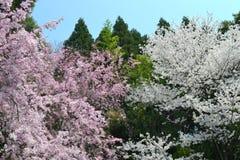 Primavera a Kyoto, Giappone Fotografie Stock Libere da Diritti