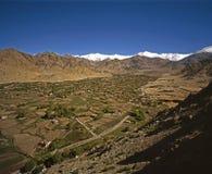 Primavera in Ladakh Fotografia Stock