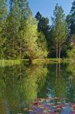 Primavera lakeshore Foto de Stock
