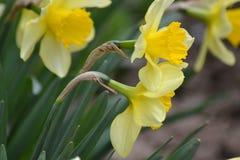 Primavera libre, fragancia 1 de la flor Imagen de archivo