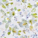 Primavera Lily Flowers Background Fotos de archivo libres de regalías