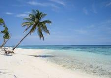 Primavera in Maldive fotografia stock