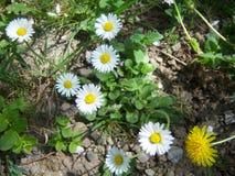 Primavera maravillosa Foto de archivo