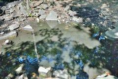 Primavera mineral en el taiga 4 Imagen de archivo libre de regalías