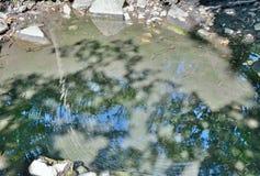Primavera mineral en taiga Foto de archivo