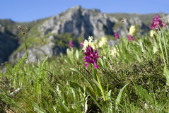 Primavera in montagne Fotografia Stock