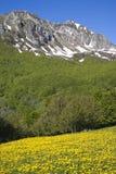 Primavera in montagne Fotografia Stock Libera da Diritti