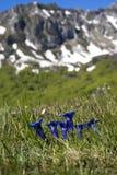 Primavera in montagne Fotografie Stock Libere da Diritti