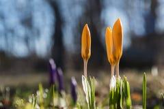 primavera na cama de flor Fotos de Stock Royalty Free