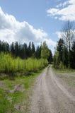primavera na floresta Foto de Stock Royalty Free