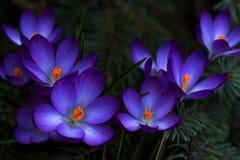 primavera na floresta Imagens de Stock
