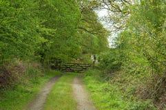 primavera na floresta do decano Imagem de Stock Royalty Free