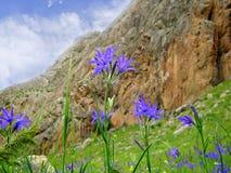 primavera na montanha Imagens de Stock