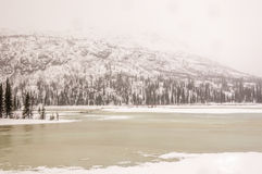 primavera na região selvagem de Alaska Imagem de Stock Royalty Free