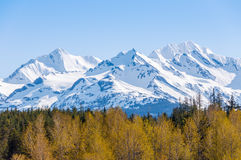 primavera na região selvagem de Alaska Fotos de Stock