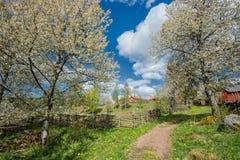 primavera na Suécia Imagem de Stock