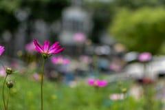 Primavera a Nanchino Fotografia Stock Libera da Diritti