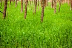 Primavera, naturaleza, paisaje hermoso e hierba verde y árboles Fotos de archivo libres de regalías