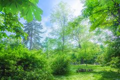 Primavera nel parco Immagini Stock