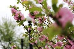 Primavera nel parco immagine stock