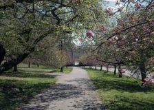 Primavera nel parco Fotografie Stock Libere da Diritti