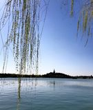 Primavera nel parco di beihai a Pechino Cina Fotografia Stock