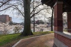 Primavera nel parco di Branchbrook Immagine Stock