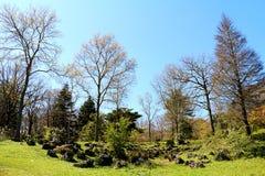 Primavera 2014 nell'arboreto di Ataturk vicino a Costantinopoli Fotografia Stock Libera da Diritti