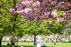 Primavera nella città immagine stock libera da diritti