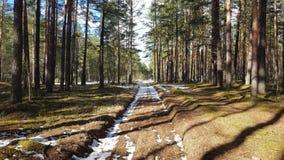 Primavera nella foresta Immagine Stock Libera da Diritti