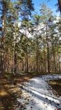 Primavera nella foresta Immagine Stock