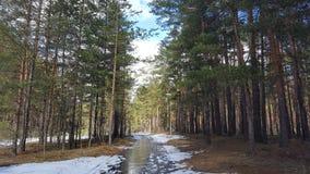 Primavera nella foresta Fotografia Stock