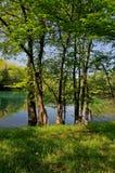 Primavera nella natura Fotografia Stock