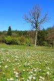 Primavera 2014 nella vista di Lanscape dell'arboreto di Ataturk Fotografie Stock