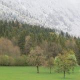 Primavera nelle alpi in Europa Fotografie Stock Libere da Diritti