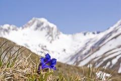 Primavera nelle montagne del Tirolo del sud immagini stock