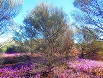 primavera no interior Imagem de Stock Royalty Free