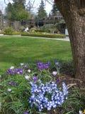 Primavera no parque Foto de Stock