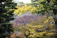 Primavera no parque japonês, Kyoto Imagem de Stock