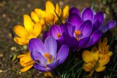 primavera no prado Fotografia de Stock