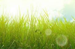 Primavera o hierba de prado del verano los tonos de oro Llamarada de la lente Rayos de Sun Foco selectivo Fondo floral Estilo ret imágenes de archivo libres de regalías
